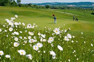 Gäste spielen Golf auf dem Bella Vista Golfpark in Bad Birnbach.